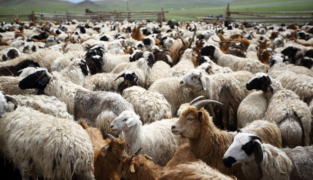 The Sheep and theGoats